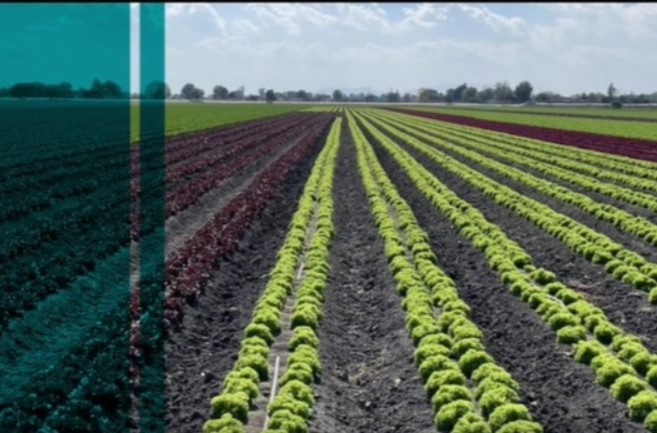 Why is AI so useful to agriculture and food production?